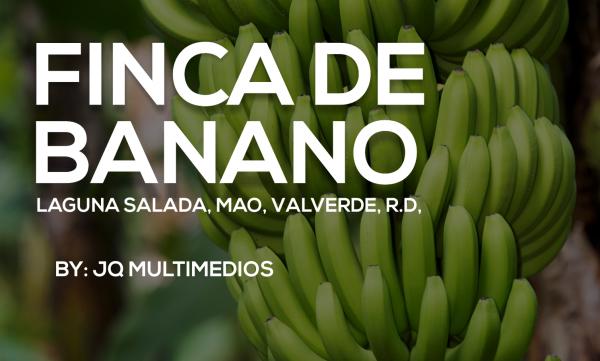 Finca de Banano Orgánico en República Dominicana
